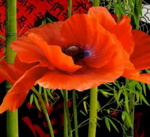 Poppies by Dorothy Freudenberg